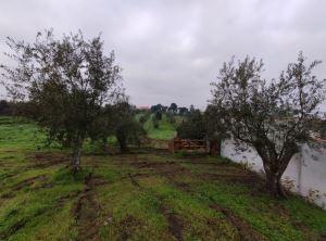 Terreno agrícola, para Compra